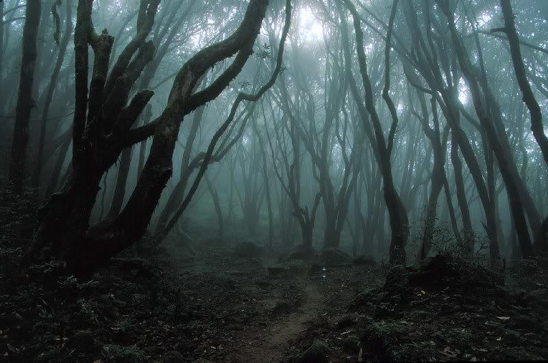 Samhain - Feis Shamhna