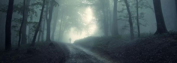 Lonely road through a gothic wood shrouded in the mist. Fantasy or horror
