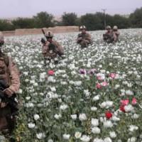 The Big Winner In Afghanistan: The Opium And Heroin Trade